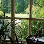 Jane Yolen Window